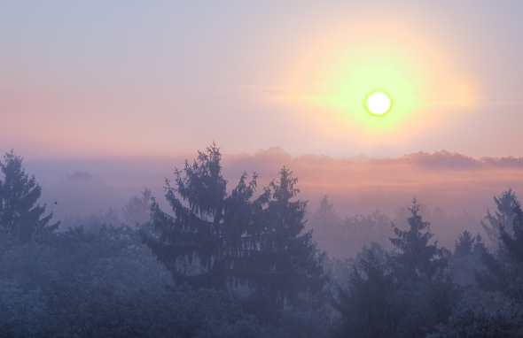 HDR version of Sunrise in Chantilly Forest