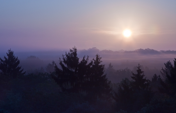 Sunrise in the mist of Chantilly Forest