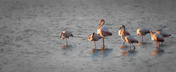 Flamingos in the sunset selective color hyeres - martinsoler.com