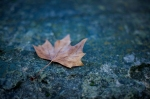 Autumn leaf by the Seine